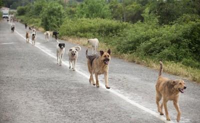 patrimonio canino
