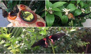 """Siracusa, apre la """"Casa delle farfalle"""": un ecosistema tropicale a palazzo Vermexio"""
