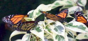 Siracusa, inaugura sabato la Casa delle farfalle. Accesso gratuito per le persone disabili