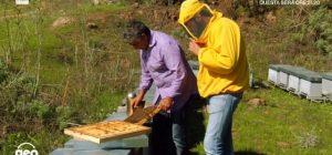 """Sortino su Raitre in un servizio di """"Geo"""": l'eccellenza del miele e le meraviglie naturali ed enogastronomiche"""
